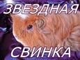 Питомник «Звёздная Свинка»
